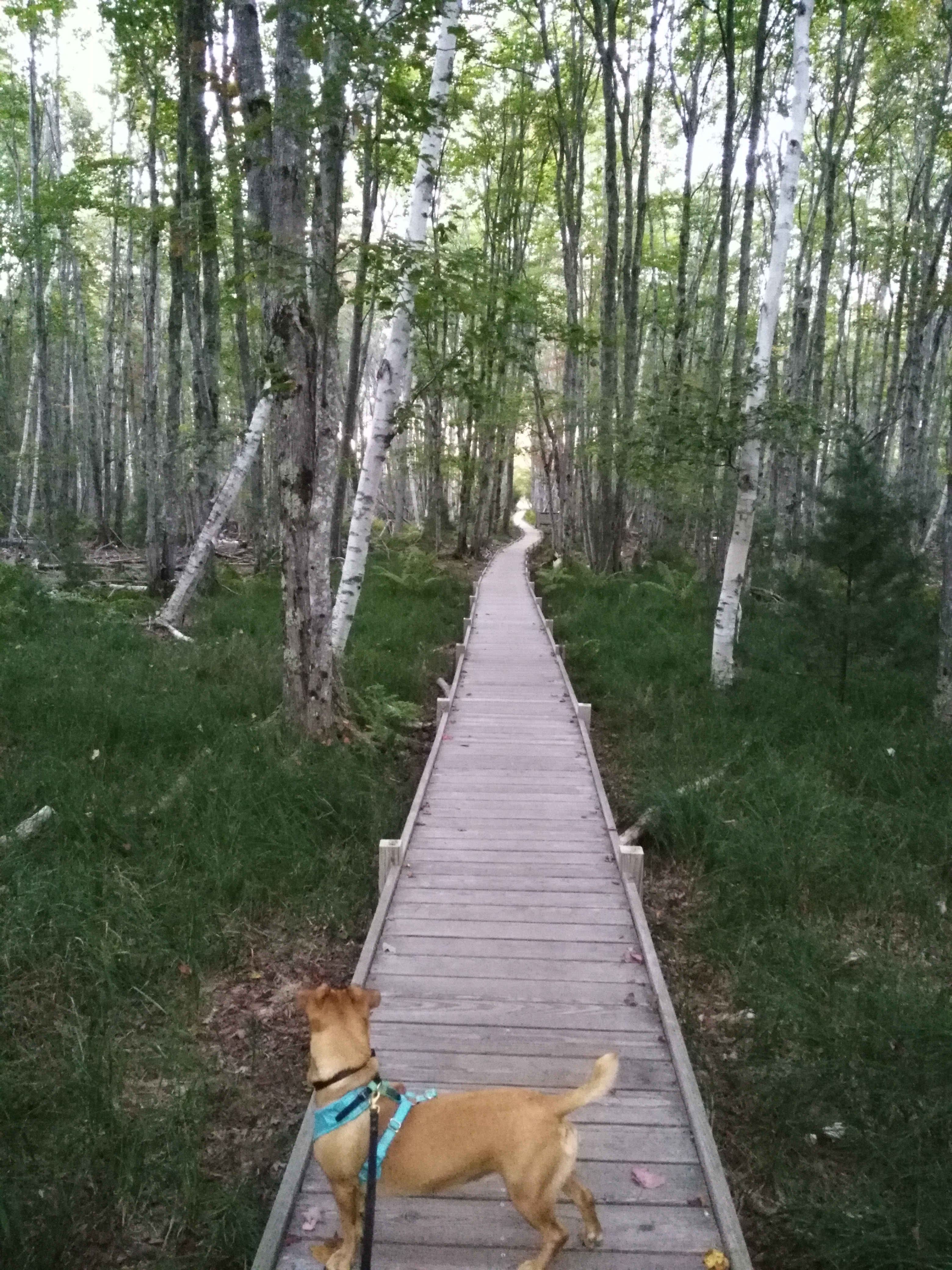 Acadia Hiking Guide: Jesup Trail