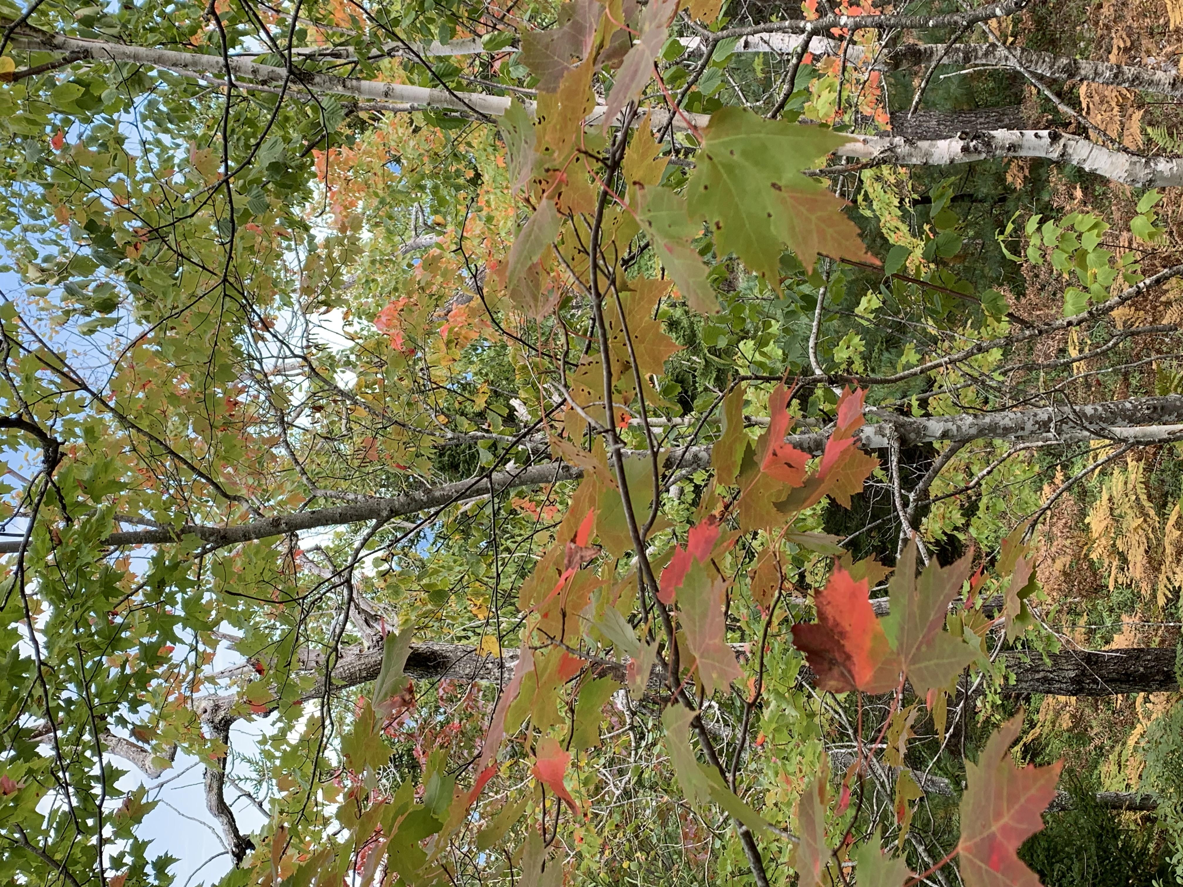 High Season for Leaf Peeping in Acadia is Mid-October